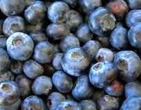 背景蓝莓 图库摄影