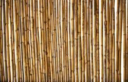 背景藤茎干燥纹理 免版税库存图片