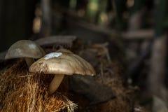 背景蘑菇关闭查出在白色的蘑菇 库存照片
