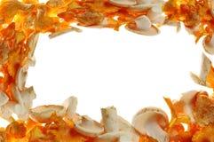 背景蘑菇 免版税图库摄影