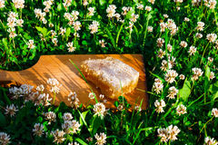 背景蜂蜜蜂窝图象白色 图库摄影