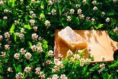背景蜂蜜蜂窝图象白色 库存照片