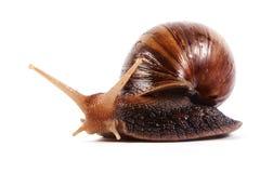 背景蜗牛白色 库存图片