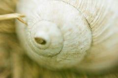 背景蜗牛 免版税图库摄影