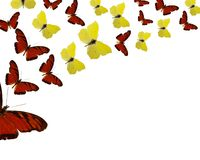 背景蝴蝶上色了异乎寻常 免版税库存照片