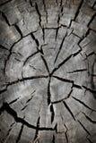 背景被剪切的老结构树 免版税图库摄影