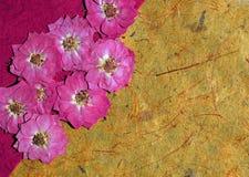 背景被按的玫瑰 库存照片