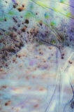 背景被绘的水彩 免版税图库摄影