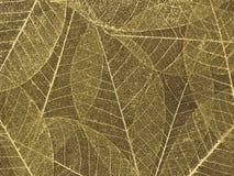 背景装饰叶子概要 免版税库存图片