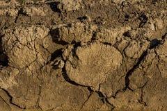 背景褐色破裂的干燥地球纹理 免版税库存图片