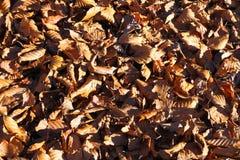 背景许多干秋天在秋天离开 库存图片