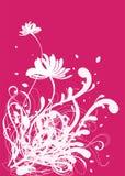 背景设计花卉模式 库存图片