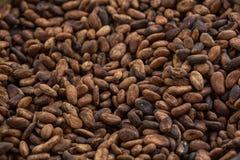 背景豆可可粉例证向量白色 免版税图库摄影