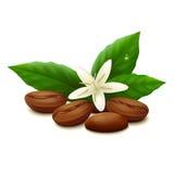 背景豆咖啡例证烤向量白色 免版税库存图片
