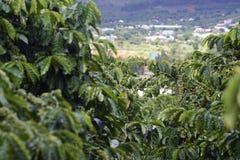 背景豆咖啡例证 库存照片
