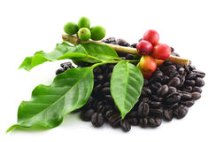 背景豆咖啡白色 免版税库存照片