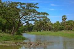 背景运河崩裂了浮动的绿色泥工厂水 库存照片