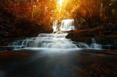 背景迷离Mandang瀑布在泰国 一朵桃红色花 库存照片
