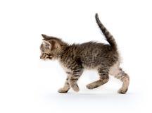 背景逗人喜爱的小猫平纹白色 免版税库存照片
