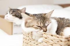 背景配件箱猫白色 免版税库存图片