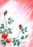 背景重点玫瑰 库存照片