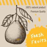 背景金子查出的lable模板葡萄酒 着墨手拉的设计用在减速火箭的背景隔绝的柑橘水果 库存照片