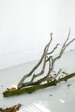 背景钮扣眼上插的花看板卡装饰装饰邀请婚姻白色的珍珠玫瑰 木头装饰在地板上的 在地板上的树 在白色地板上的吠声 在环境式的装饰 库存图片