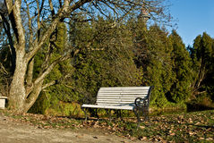背景长凳森林池塘白色 图库摄影