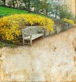 背景长凳连翘属植物grunge 库存照片