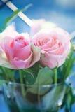 背景颜色绘画玫瑰花瓶水白色 库存图片