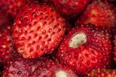 背景食物系列草莓 前景接近的宏指令 免版税库存图片