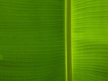 背景香蕉叶子 免版税库存图片