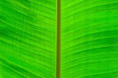 背景香蕉叶子 库存照片