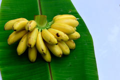 背景香蕉果子查出白色 免版税库存照片