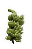 背景香蕉食物素食白色 库存图片