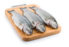 背景鱼三鳟鱼白色 库存图片