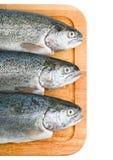 背景鱼三鳟鱼白色 库存照片