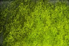 背景鲜绿色grunge纹理 免版税库存照片