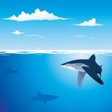 背景鲨鱼 免版税图库摄影