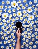 他们背景鸟笼概念花卉的夏天 一个杯子咖啡在一只妇女` s手上在与春黄菊或雏菊的蓝色背景 你好夏天 库存图片