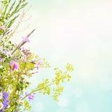 他们背景鸟笼概念花卉的夏天 免版税库存图片
