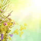 他们背景鸟笼概念花卉的夏天 免版税图库摄影