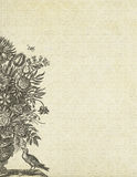 背景鸟花卉花瓶葡萄酒 图库摄影