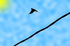 背景鸟葡萄酒 图库摄影