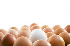 背景鸡蛋 免版税库存照片
