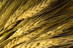 背景麦子 库存照片