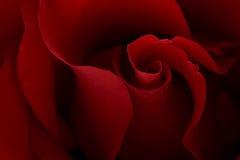 背景黑暗的喜怒无常的红色上升了 库存照片