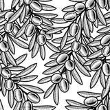 背景黑橄榄无缝的白色 库存照片