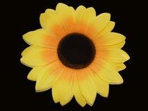 背景黑色向日葵 免版税库存照片