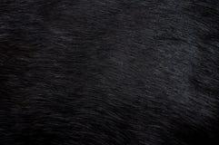 背景黑色毛皮 库存图片